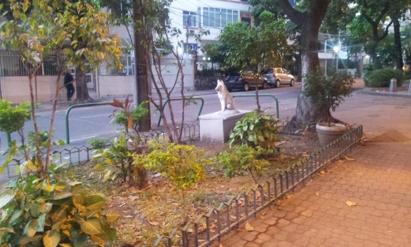 Canteiro - Cão misterioso - Tijuca (Foto: Rafael Junqueira/ Mundo Pauta)