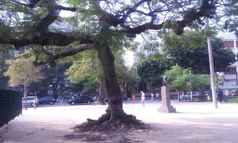 Será o exemplo da árvore da Vida? (Foto: Rafael Junqueira / Mundo Pauta)